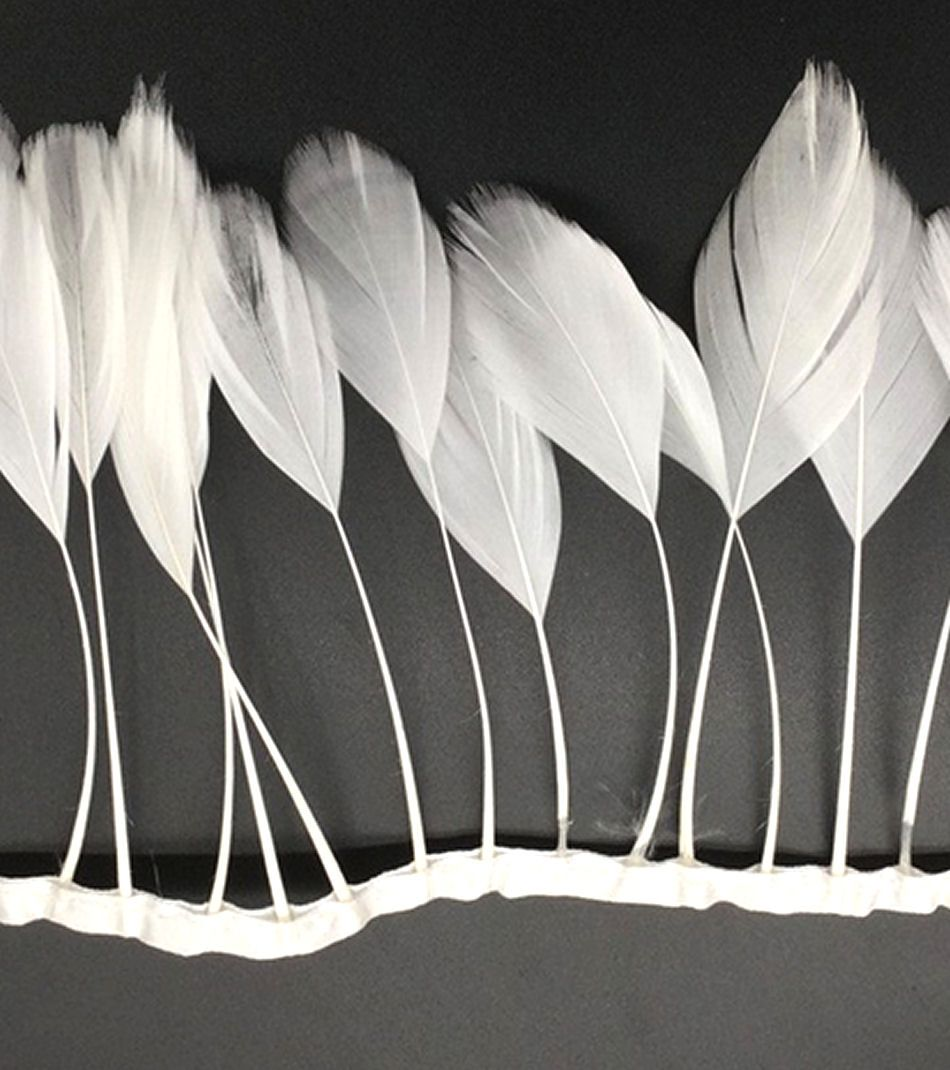 White Stripped Coque Tail Rooster Feathers x 10