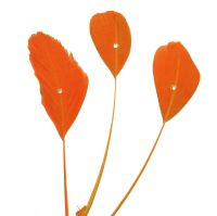 Orange Stripped Coque Feathers With Rhinestone Gems