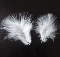 White Marabou Feathers - Small