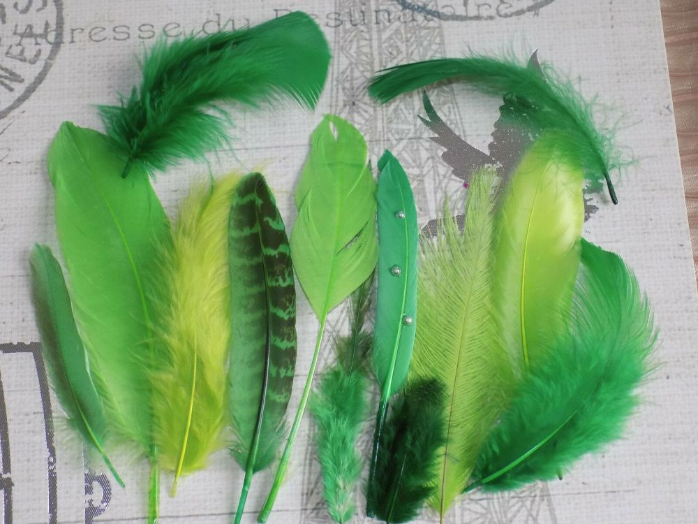 Green Selected Popular Feathers x 12