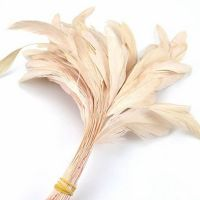 Nude Natural Stripped Coque Tail Rooster Feathers x 6