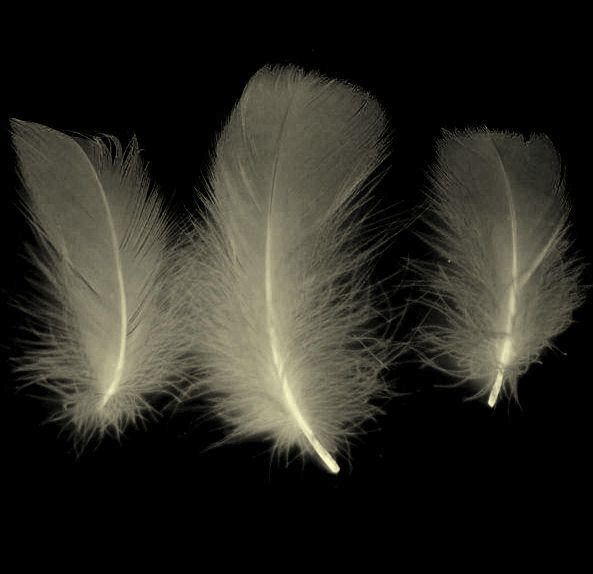 Ivory Goose Coquille Feathers x 25