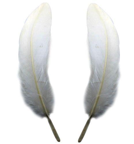 White Goose Feathers x 4