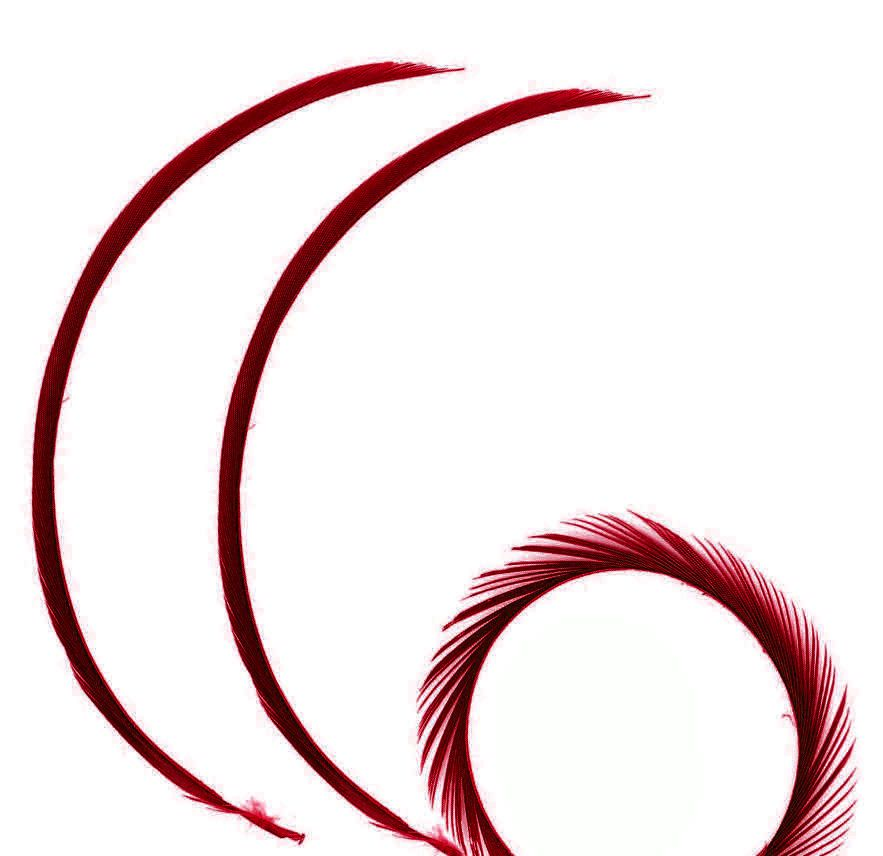 Red Wine Goose Biot Feather