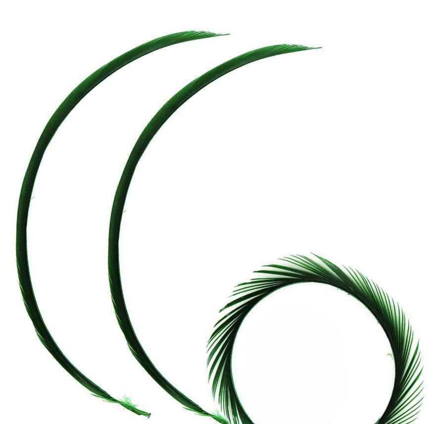 Dark Green Goose Biot Feather