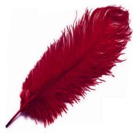 Red Wine Ostrich Feather