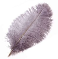 Pale Mauve Ostrich Feather