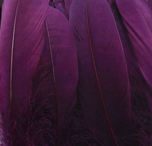 Plum Purple Goose Quill Feathers x 4