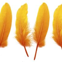 Golden Yellow Goose Quill Feathers x 4