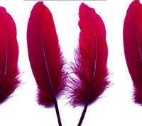 Red Wine Shade Goose Quill Feathers x 4