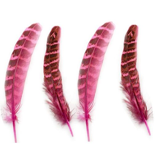 Light Pink Female Ringneck Pheasant Tail Feathers