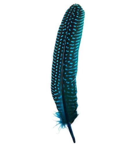 Deep Turquoise Guinea Fowl Wing Quill Feather