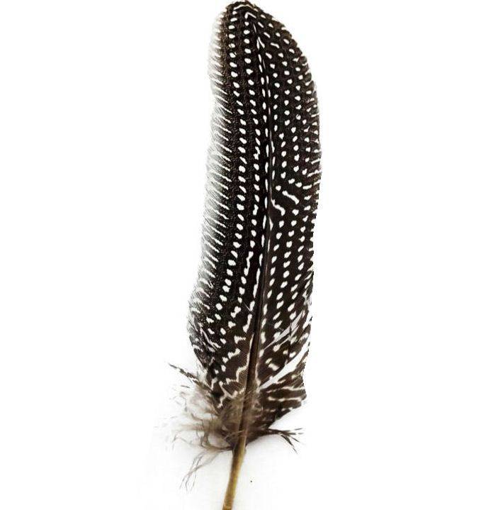 Natural Guinea Fowl Wing Quill Feather
