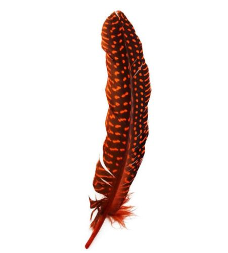 Orange Guinea Fowl Wing Quill Feather
