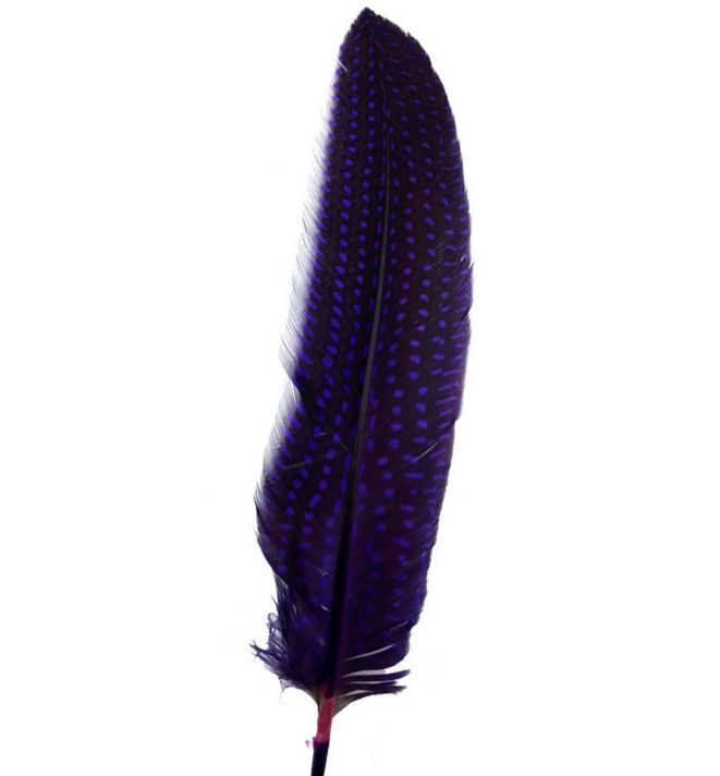 Purple Guinea Fowl Wing Quill Feather