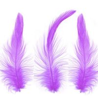 Purple Hackle Feathers x 10