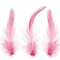 Pink Hackle Feathers x 10