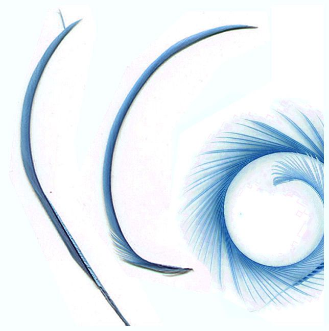 Light Blue Goose Biot Feather