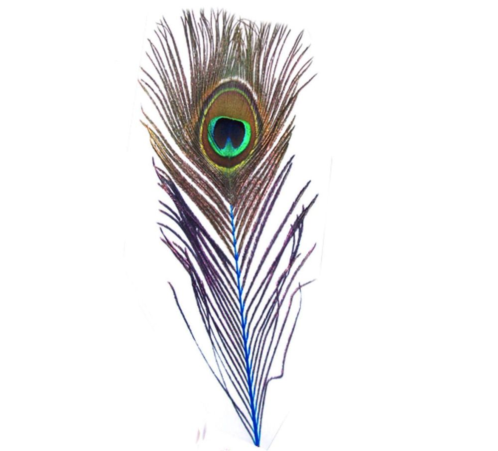Peacock Feather with Blue Stem
