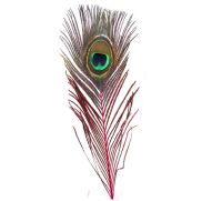 Peacock Feather with Red Stem