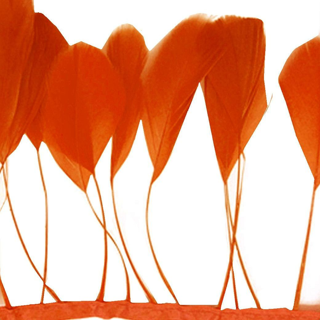 Orange Stripped Coque Tail Rooster Feathers x 10