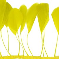 Yellow Stripped Coque Tail Rooster Feathers x 10