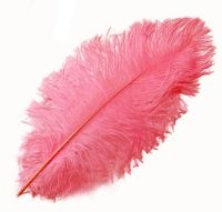 Strawberry Pink Ostrich Feather