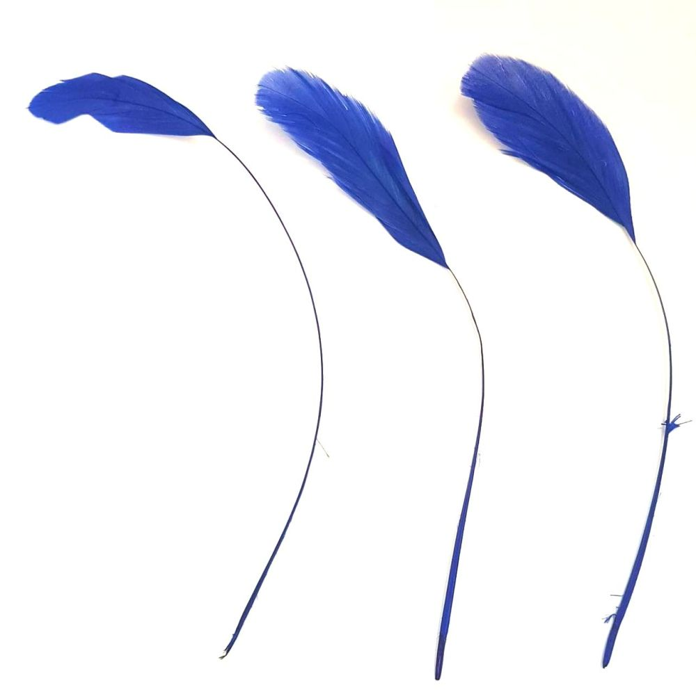 Royal Blue Stripped Coque Tail Rooster Feathers x 6