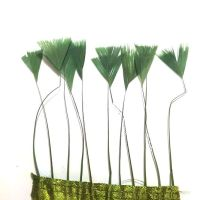 Olive Green Stripped Turkey Feathers, Strung x 10