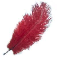Dark Red Ostrich Feather
