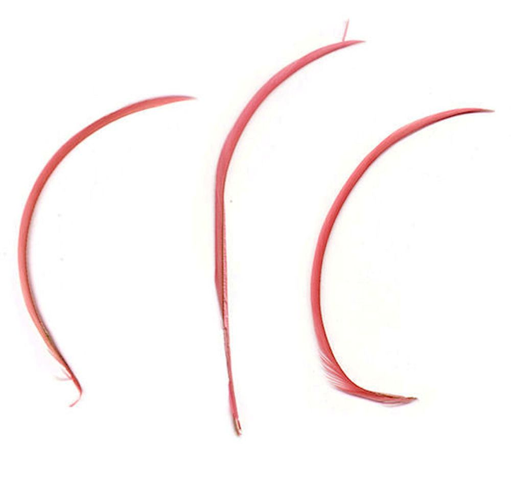 Coral Pink Goose Biot Feather x 1