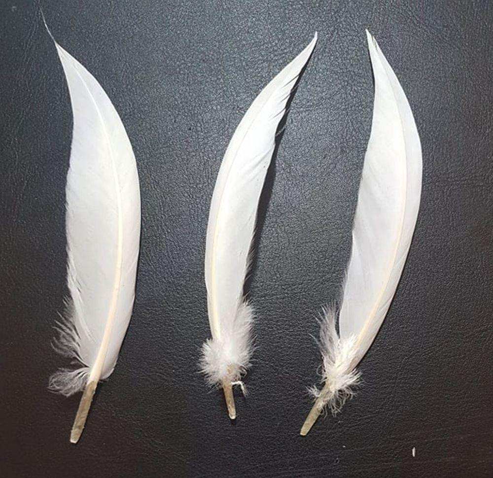 White Pointed Goose Quill Feathers x 5
