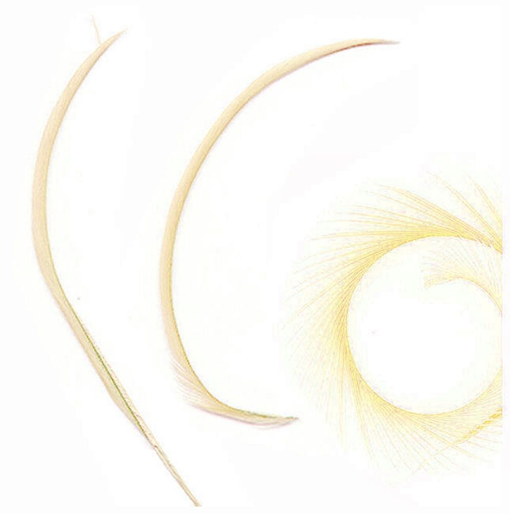 Champagne Goose Biot Feather x 1