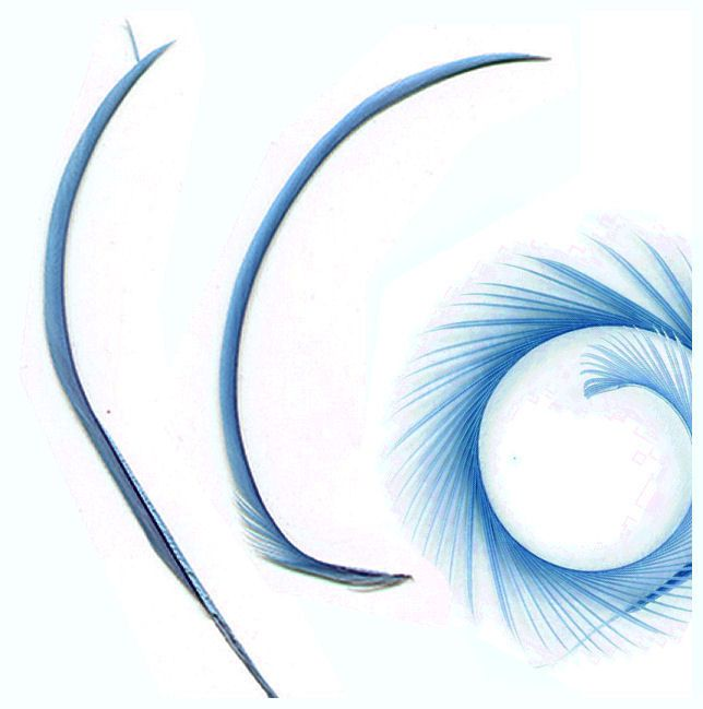Country Blue Goose Biot Feather