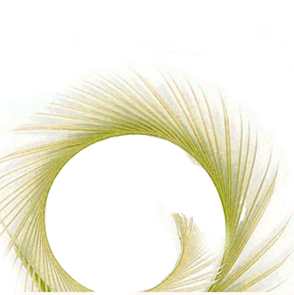 Green Eau De Nil Goose Biot Feather  x 1