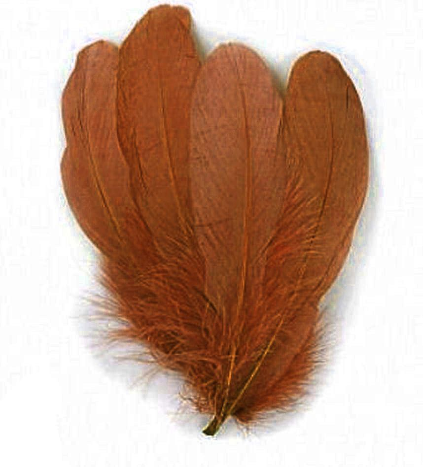 Brown Parried Goose Pallette Feathers x 5