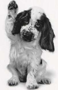 Waving puppy