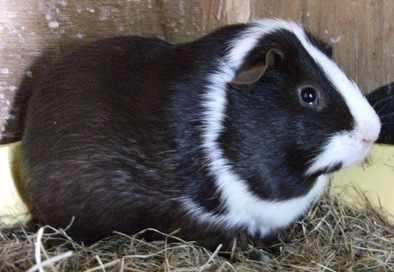 Guinea 4