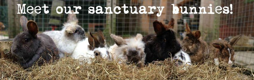sanctuary line up website
