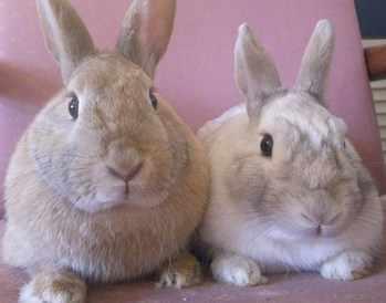 Abigail & Oliver rescue rabbits