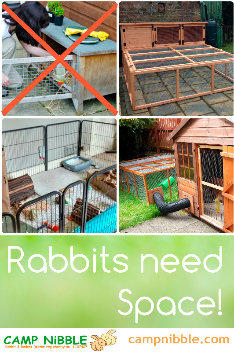 rabbits need space poster 2