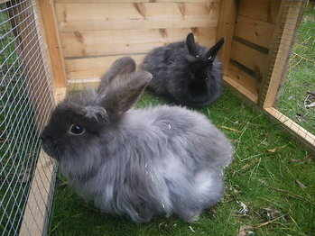 Robert and Rodney rabbits