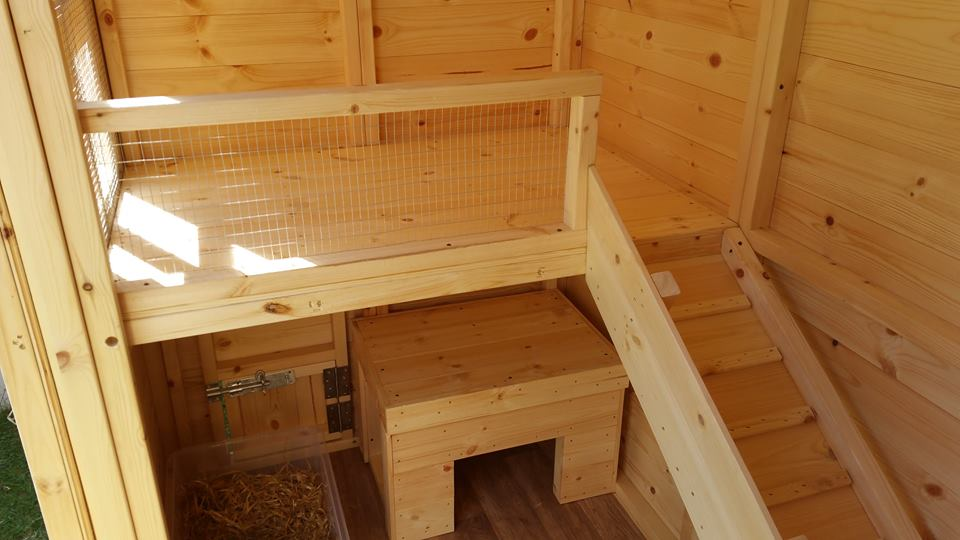 rabbit housing - boyles pet housing (laura and dora)