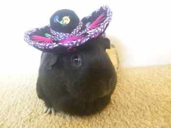 Bev 2 Sombrero