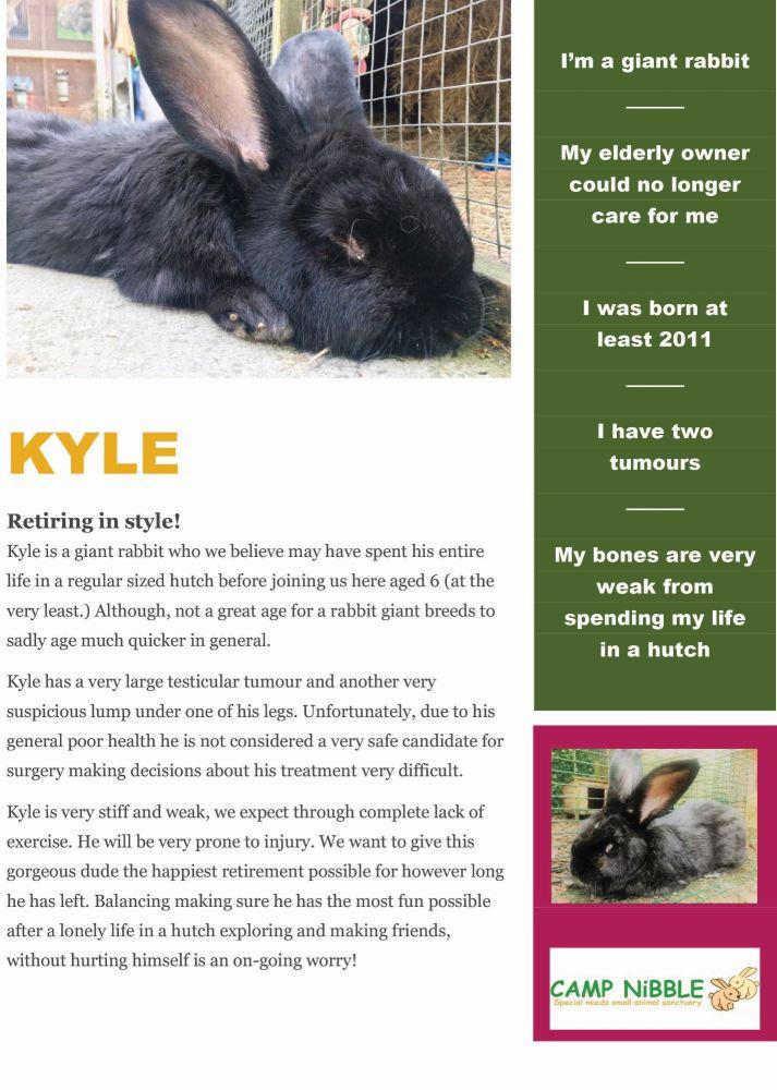 kyle info sheet pdf jpg