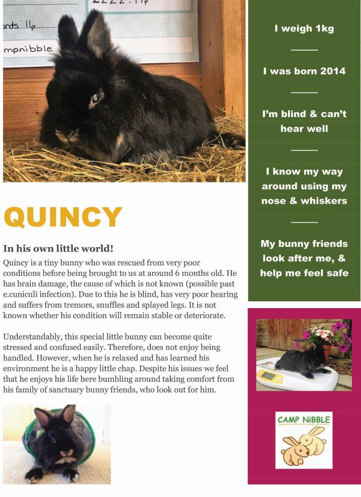 quincy info sheet pdf jpg