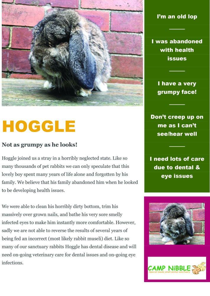 hoggle info sheet pdf jpg