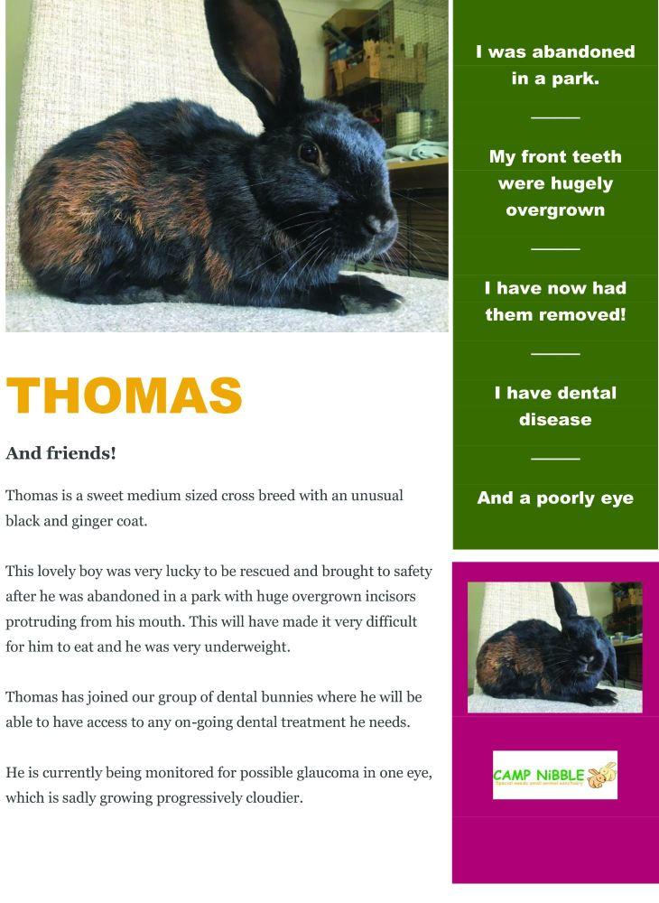 thomas info sheet pdf jpg