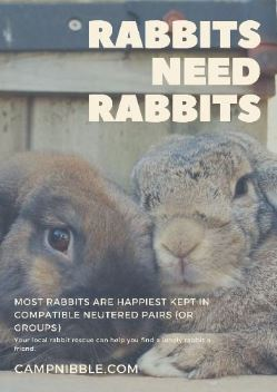 rabbits need rabbits new poster