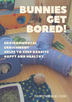 bunnies get bored poster